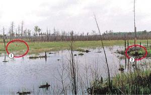 Вепский лес