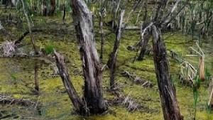 Вепские болота