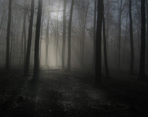 Лес в сумерках