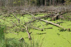 Лесное болото